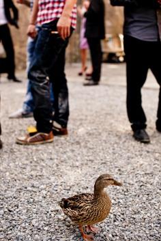 2011 ~ Duckin' ~