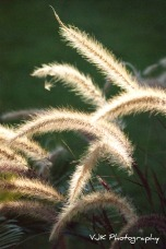 2009 ~ Sunkissed Grass